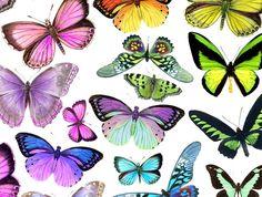Edible wafer paper butterflies | Felt