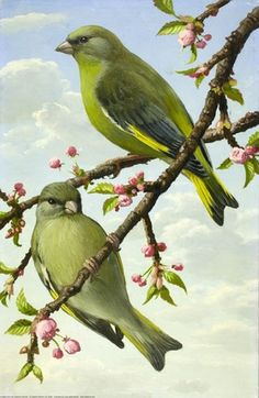 Greenfinches by John Leigh-Pemberton