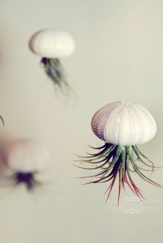 Three Stripey Jellyfish Air Plants // Sea Urchins Hanging Art Installation Wedding Favor Terrarium beach house cottage decor. $26.00, via Etsy.