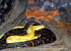 La Cámara de Lydia: Parque de Cabárceno: Los Reptiles