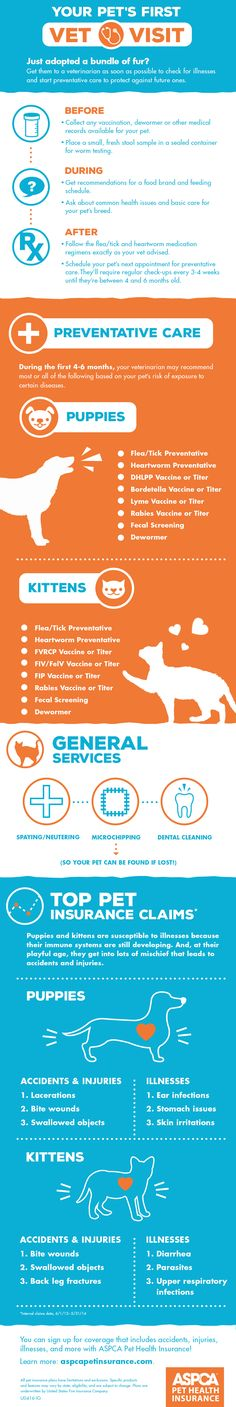 Great tips for new pet parents!