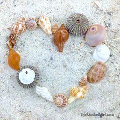 I love shells!