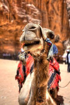 Mesopotamia and Egypt Comparative Essay Descriptive essay about