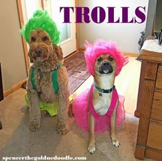 Trolls Costume
