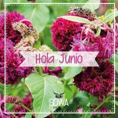 Hola Junio :)