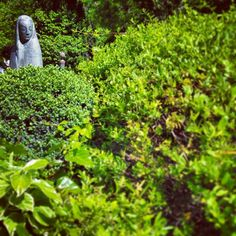 Green in the Almudena cemetery