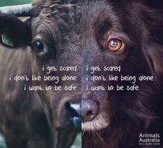 Believe It Or Not We Are All The Same .. We Get Scared .. We Don't Like Being Alone .. We Want To Be Safe