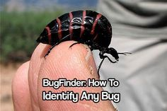 BugFinder: How To Identify Any Bug