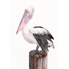 Pelican Painting  P072 wildlife nature bird art by Splodgepodge, $15.00