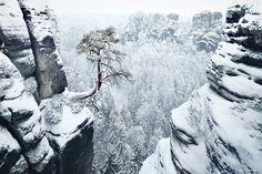 "Lone Pine - Germany <a href=""http://instagram.com/kilianschoenberger/"">@kilianschoenberger I N S T A G R A M</a>  <a href=""https://www.facebook.com/pages/Landscape-Photography-by-Kilian-Schoenberger/304631876263547"">L A N D S C A P E   P H O T O G R A P H Y facebook</a>"