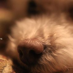 My Family全員で溺愛してる愛犬君のお鼻🐽✨♡ . . . 🌐yamamashi:自宅 . . たまにはほっこり写真もどうぞ😂笑 . . . #カメラ女子 #カメラ好きな人と繋がりたい #写真好きな人と繋がりたい #写真撮ってる人と繋がりたい #カメラ仲間募集 #ファインダー越しの私の世界 #ダレカニミセタイケシキ #やまなし写真ぶ #igで繋がる #愛犬 #lovers_nippon #wp_japan #icu_japan #jp_gallery #ig_great_pictures #_lovery_weekend_ #photographylovers #instagramjapan #canonphoto #canonphotography #8000d #tokyocameraclub #picture_to_keep #bestjapanpics_ #snowpics #art_of_japan_ #wp_photo_culb #pics_jp