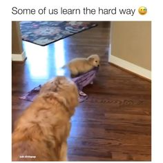 - Video by unknown 🎥 DM for credit Funny Dog Jokes, Cute Funny Dogs, Funny Dog Videos, Cute Funny Animals, Cute Cats, Funny Memes, Big Cats, Super Cute Animals, Cute Little Animals