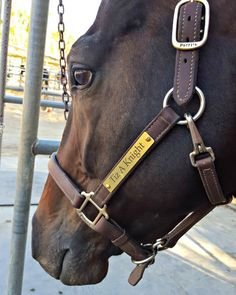 Introspective Blog Post: Deliberate Patience with Horses (& Humans) a.k.a. Why Am I Nicer to Animals than People?