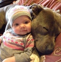 Uplifting So You Want A American Pit Bull Terrier Ideas. Fabulous So You Want A American Pit Bull Terrier Ideas. Dogs And Kids, Animals For Kids, Cute Baby Animals, I Love Dogs, Funny Animals, Pit Bull Amor, Pit Bull Love, Cute Puppies, Cute Dogs
