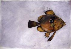 John Dory by Helen Ward John Dory, Living In New Zealand, Fish Design, Cupboard, Printmaking, Childrens Books, Illustrators, Artists, Ink