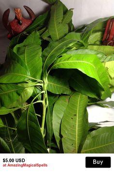 11 Best Ewe! images in 2015   Orisha, Plant leaves, Spiritual