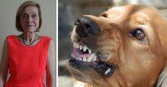 Spécialiste du comportement canin et intervenante en médiation animale, Chantal Hazard a été primée le 19 mai par la FACCO pour son Programme d'Education à la Connaissance du Chien et au Risque d'Accident par Morsure (PECCRAM). Flea And Tick, Fleas, Mai, Dogs, Animals, Culture, Bulldogs, Knowledge, Practical Life