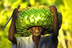 Basket of cloves, Anjouan, Comoros. - Basket of cloves, Moya village, Anjouan island, Comoros, Islamic Republic. Indian ocean.