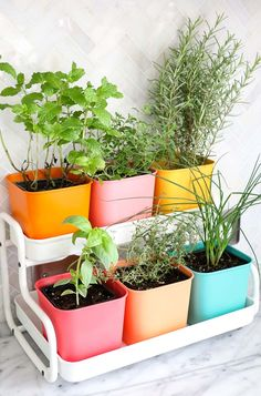 Gardening Herb Make Your Own Colorful Indoor Herb Garden // IKEA hack counter too herb garden with paint - Fresh herbs are one of the easiest ways to take your cooking from boring to fine dining.