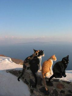 Cat meeting in Santorini :)