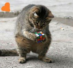 Hope he's better at Rubik's that I am!
