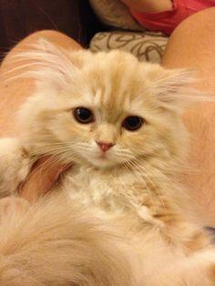 Cutest Kitten...