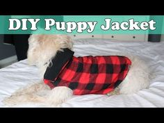 Create a DIY Puppy Jacket in Under an Hour | DIY Lifestyle Fashion Blog