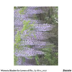 Wisteria Blanket for Lovers of Flowers