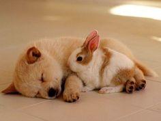 Gute Nacht: Zehn schlafende Hunde, die man sehen muss! - Seite 2