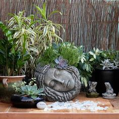 Sleeping Beauty in Cast Stone Pots - eclectic - outdoor planters - - by Potted