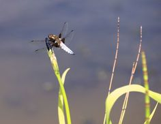 Dragonfly by Lucy Maitland Smith, Oxfordshire Cotswolds photographic competition 2014