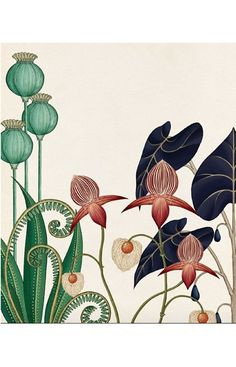 I also love this style of illustration illustration blume, nature illustration, botanical drawings, Illustration Art Drawing, Nature Illustration, Art Drawings, Vintage Illustration, Illustrations, Flower Drawings, Photo Illustration, Tattoo Drawings, Botanical Drawings