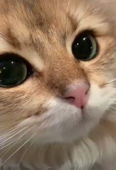 According to veterinarians, the 10 best dry foods for cats .- Laut Tierärzten die 10 besten Trockenfuttermittel für Katzen – According to veterinarians, the 10 best dry foods for cats – to - Cute Baby Cats, Cute Little Animals, Cute Cats And Kittens, Cute Funny Animals, Funny Cats, Adorable Kittens, Ragdoll Kittens, Funniest Animals, Tabby Cats