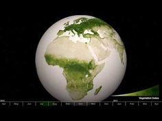 Cómo cambia toda la vegetación de la Tierra durante un año El 75% de nuestro planeta está cubierto por agua y su color es muy estable. El 25% restante está cubierto por la vegetación y las tonalidades de verde pueden tener muchas variaciones.  Este vídeo ha sido realizado con datos del sensor VIIRS que se encuentra en el satélite Suomi NPP de la NASA y la NOAA. Este instrumento es capaz de detectar los más sutiles cambios de color de la vegetación.