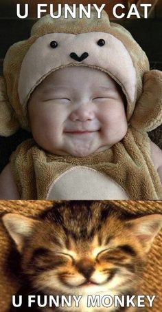 Japa baby + cat = love funny baby pictures with captions Funny Shit, You Funny, Funny Cute, Funny Memes, Hilarious, Cat Memes, Funny Videos, Funny Things, Baby Cats