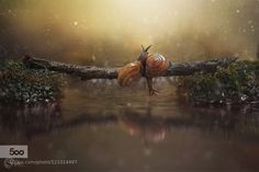Snails by imtiazshad6. Please Like http://fb.me/go4photos and Follow @go4fotos Thank You. :-)