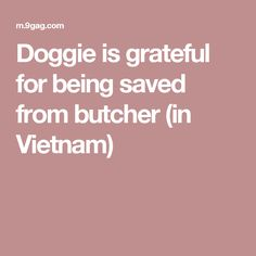 Doggie is grateful for being saved from butcher (in Vietnam)