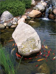outdoor fish pond ideas | Some clients find koi ponds tranquil. Others see them as hard work.