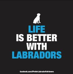 Labradors, working on that