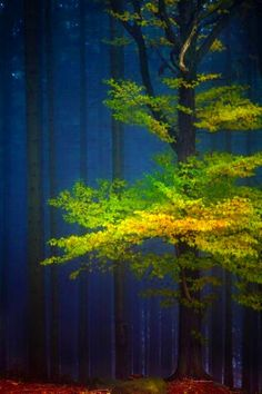 Tree and forest, Germany - David Pinzer. Indigo, leaf green and yellow = winning combination.(Cool Pictures Of Nature) Beautiful World, Beautiful Places, Beautiful Pictures, Beautiful Forest, All Nature, Amazing Nature, Nature Pics, Tree Forest, Autumn Forest