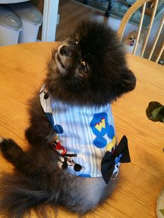 54 Best Pet Clothes Images On Pinterest Dog Clothing Cute Dogs