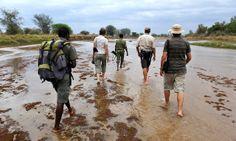 Days at Mwaleshi centre around walking safaris in the game-rich North Luangwa. Africa Travel, Big Game, Safari, Centre, Walking, Pure Products, Adventure, Women, Walks