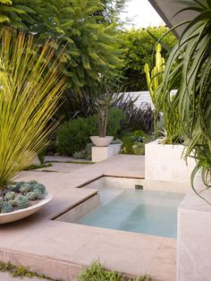 Relaxation! Artful positioning of cacti and succulents around an inviting water spa. Landscaping: Surfacedesign, Inc. Photo: Marion Brenner. #succulent_sanctuary #SerraGardens_dasylirion #succulent_poolside