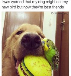Funny Animal Pictures Of The Day - 21 Images #BigDog #DogStuff