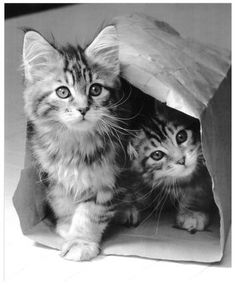 kittens and a bag