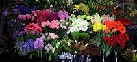 Florists have become an important part of our lives, helping us express our emotions in the best way. In terms of flower delivery Singapore offers many florists, delivering quality and customer value. However, these are not the only elements you should consider in choosing a florist. It is essential that whichever florist you choose fits