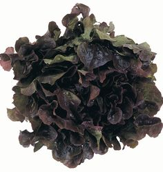 Red Leaf Lettuce  Four leaves contain 1,213 mcg of antioxidants, 96 mcg of vitamin K (shown to maintain bone mass), 1,172 mcg of the carotenoids lutein & zeaxanthin. The National Institutes of Health found that lutein & zeaxanthin can decrease risk of developing macular degeneration by 43%.     OTHER NUTRIENTS: vitamin A, vitamin B6, vitamin C, folate, and potassium     DISEASE-FIGHTING POWER: osteoporosis, macular degeneration, cancer, heart disease, hypertension, Alzheimer's, & weight gain
