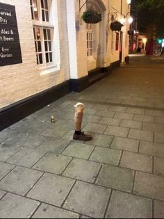 Funny Memes - [Ever been so drunk, you left your leg outside the pub? Funny Drunk Pictures, Funny Drunk Texts, Funny Pictures Tumblr, Drunk Humor, Meme Pictures, Man Humor, Tumblr Funny, Funny Posts, Funny Memes