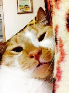 Eddie Jr. gato ruivo