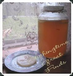 (Kombucha & Kefirs) Kombucha mushroom scoby cultures pictures & info & where to buy Kombucha How To Make, Making Kombucha, Kombucha Mushroom, Kombucha Benefits, Alcoholic Drinks, Beverages, Water Kefir, Fermented Foods, Natural Remedies